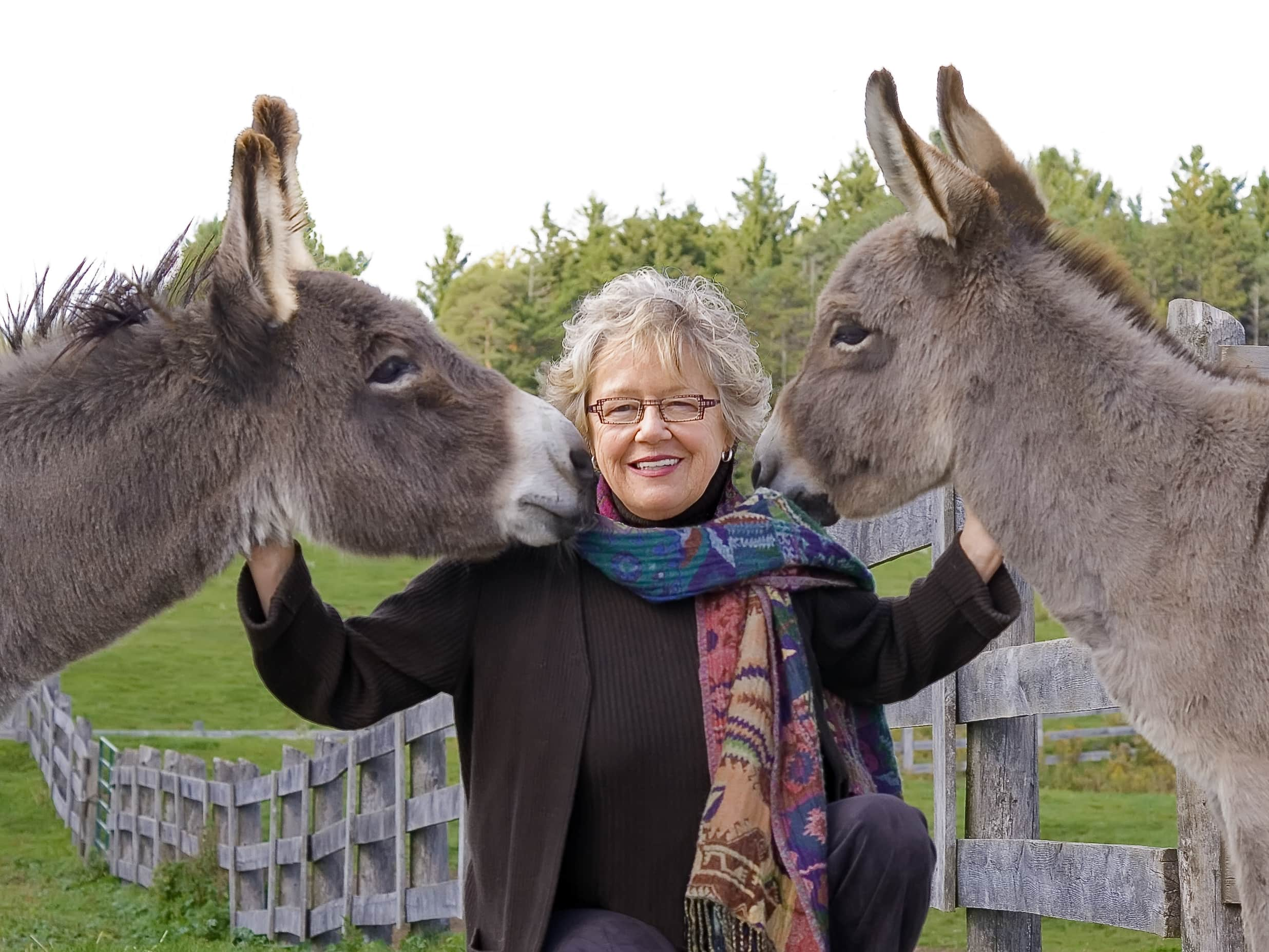 Sandra and Donkeys